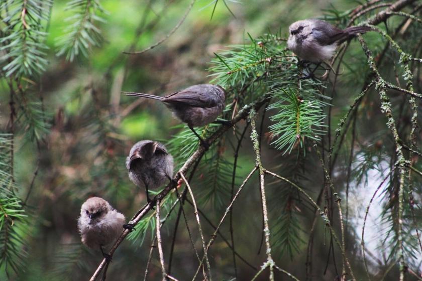 Bird Watching in the PNW