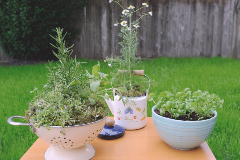 Herbs in Upcycles Containers