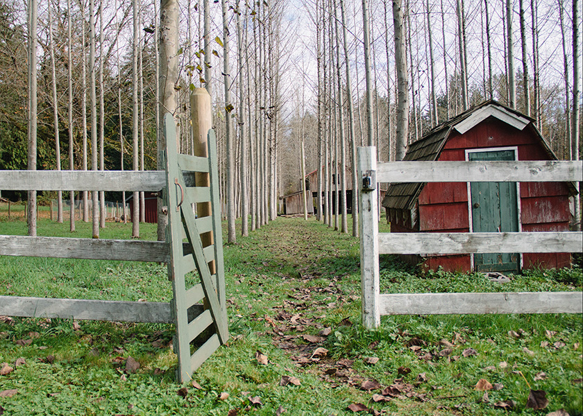 Arbutus Ridge Farm