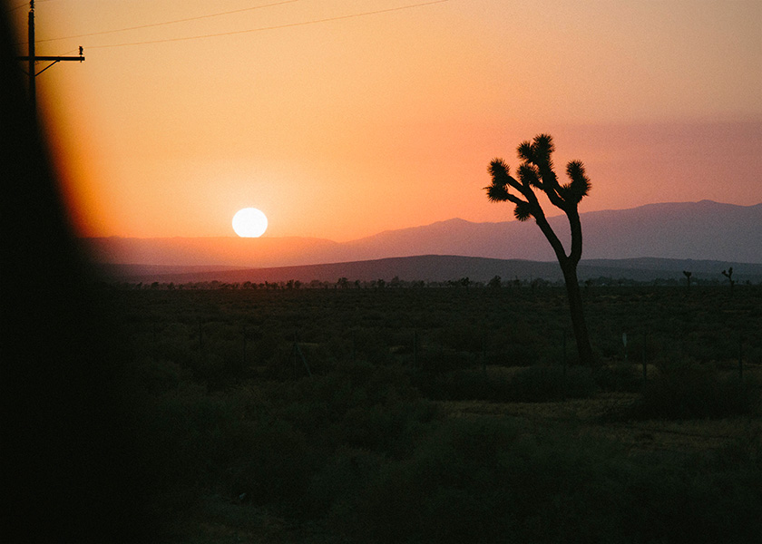 Sunset with Joshua Tree