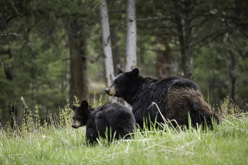 Bear Aware Safety Measures and Tips